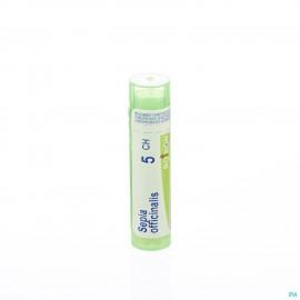 Sepia Officinalis 5ch Gr 4g Boiron