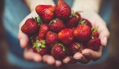 Les fruits rouges sont d'actualité